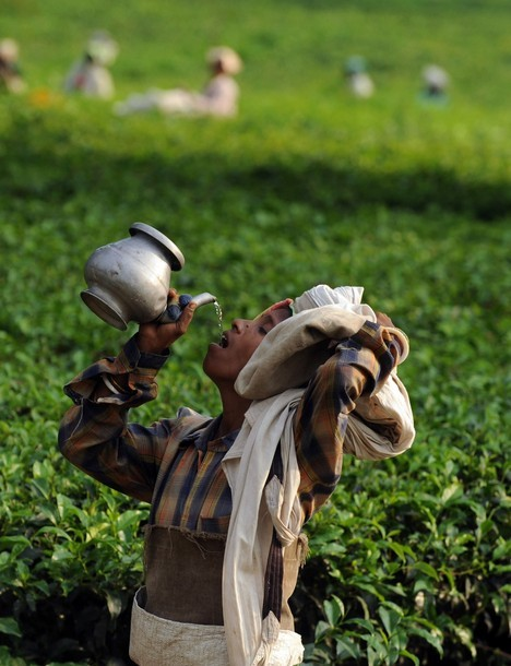 sukhada:  Indian female tea garden labourer