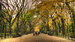 slickkickscleanwhips:  Central park in October