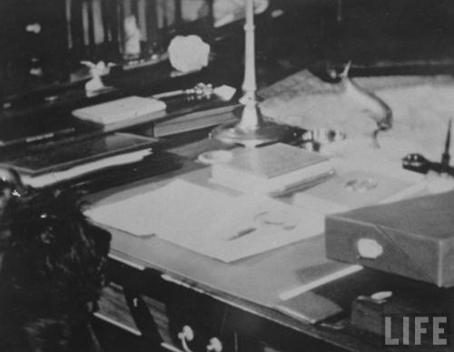 Fala, Scottish terrier of FDR, sitting behind desk of his master in study of country house, Hyde Park, N.Y., 1945. (LIFE)