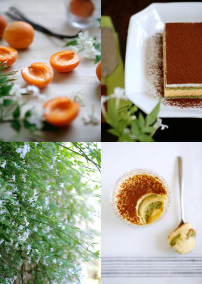 Apricot and Matcha Tiramisu Recipe Here  love her site!