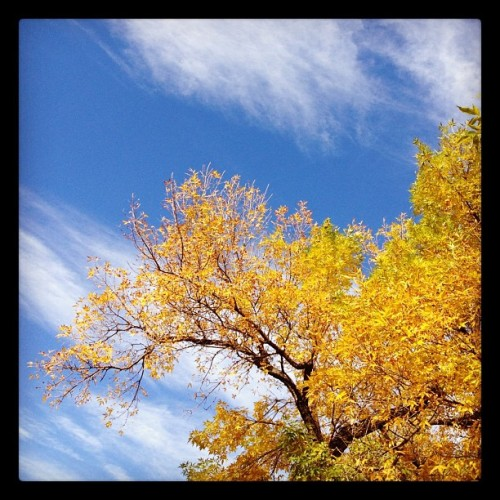 #fall #colors #denver  (Taken with Instagram at Cherry Creek North)