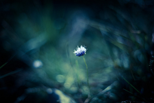 skybreaker:  Flower by {Flixelpix} David on Flickr.