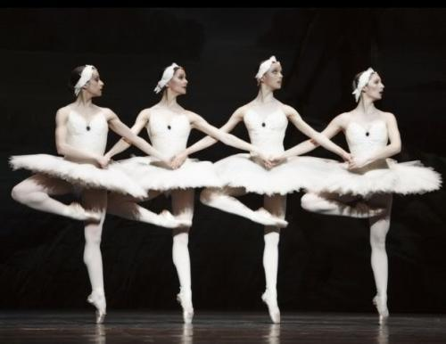 liveanddancealittlebit:  nutcrackermommy:  Little Swans  Damn, those are some high passes!