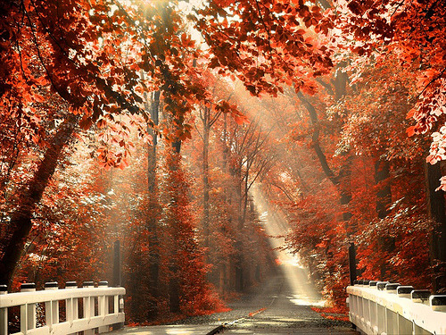 timothyjoel:  Red For Rest (by larsvandegoor.com)
