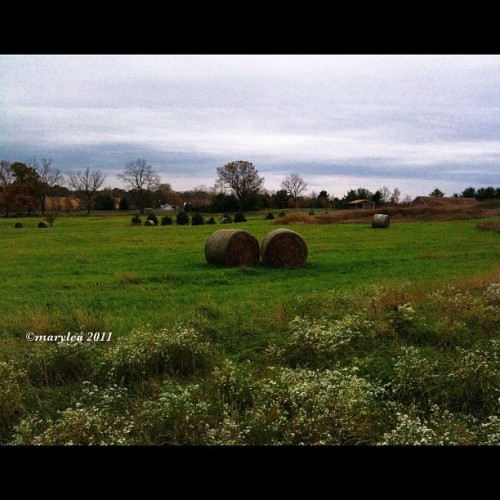 October 16, 2011. #green #field #hay #bales #mlm #october #maryleafaves #autumn #rotoballes  (Taken with instagram)