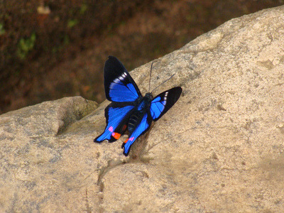reginaldonaldo:  (Image)  Bluetiful butterfly by denistak