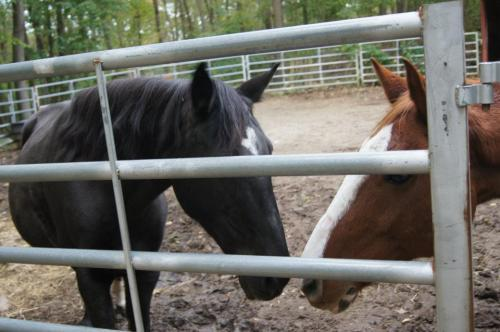 pony love at Beech Brooke Equine Rescue