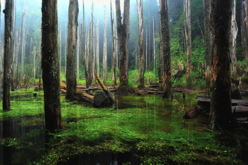"Swampy forest in Taiwan (via 500px / Photo ""The beauty of Taiwan's forests"" by EastEvil 小邪)"