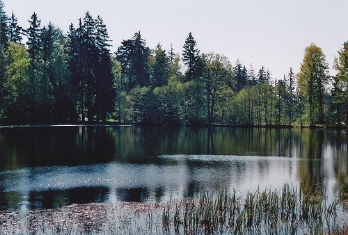 hey-there-kid:  It's beautiful how many notes a picture of a lake can get.