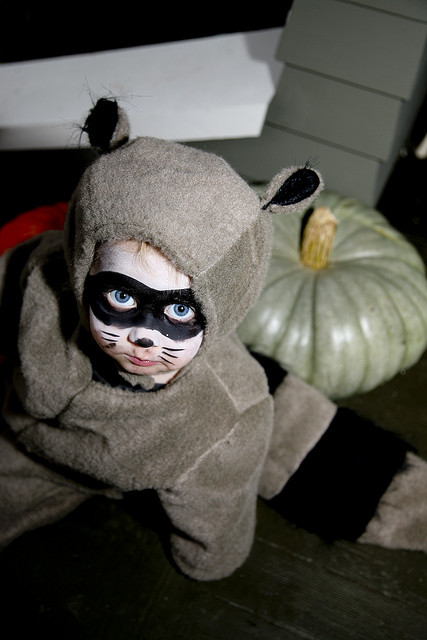 Raccoon Costume by starparticle on Flickr.