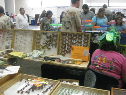 buggirl:  Bug fairs are so awesome.  SO. COOL. I want to go to one!