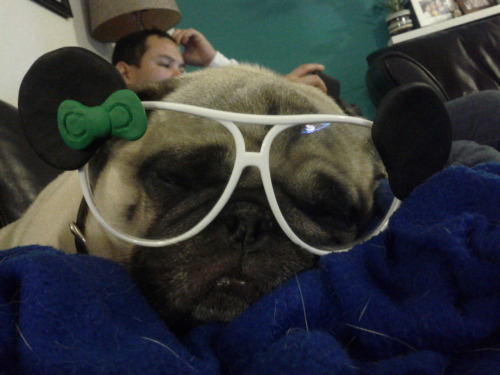 shhh lil panda pug needs his beauty rest