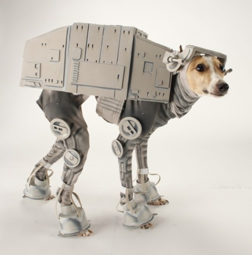 "The AT-AT Dog ""General, prepare your troops for a surface attack."" -Darth Vader May the force be with you and your dog this Halloween! If you are in some need of inspiration or are looking to create an awesome costume for your lovable dog (or cat), go with the force. This Italian Greyhound named Bones, above, is known for this amazing AT-AT costume."