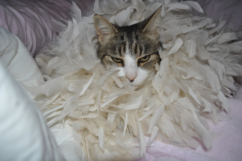 getoutoftherecat:  take that off cat. you are not a drag queen. you may not shake dat booty for money you are a cat.