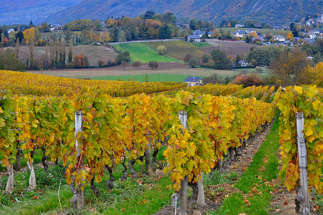 | ♕ |  Autumn in vineyard - Savoie, France  | by Michele*mp