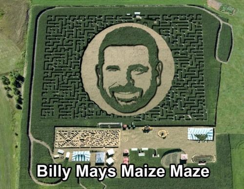 A-Mays-Maize-Mazing. That was like. Sorry. :(