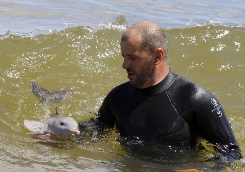 Insanely Cute Pictures Of A Man Taking Care Of An Orphaned Baby Dolphin   A baby dolphin with its umbilical cord still attached was found beached near Montevideo, Uruguay. Luckily, a rescue organization got involved and and has been nursing the little guy back to health.