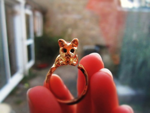 My new ring is a little kitty cat. I am feeling a bit better :3