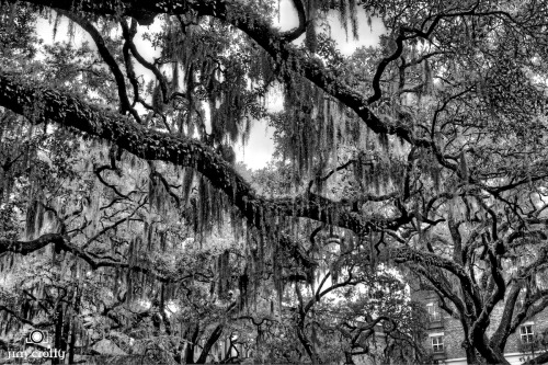 Above the streets of Savannah #blackandwhitephotography