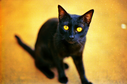 89cats:  Black & Yellow by Fabio Cundines