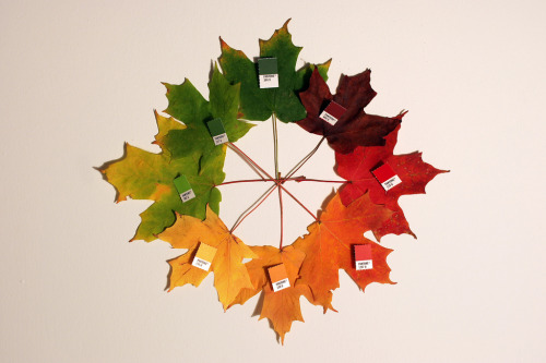I just love this ace pantone autumn by Chris Glass. I've been picking up a lot of fallen leaves recently. I make notes, doodle, and write song lyrics on them. I keep the leaves in my flat for a few days until they're nice and crisp, then throw them out the window and watch them tumble down the street. Feels like permissible litter and graffiti, both.
