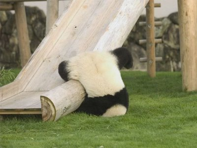 look at the panda its like a lazy fall