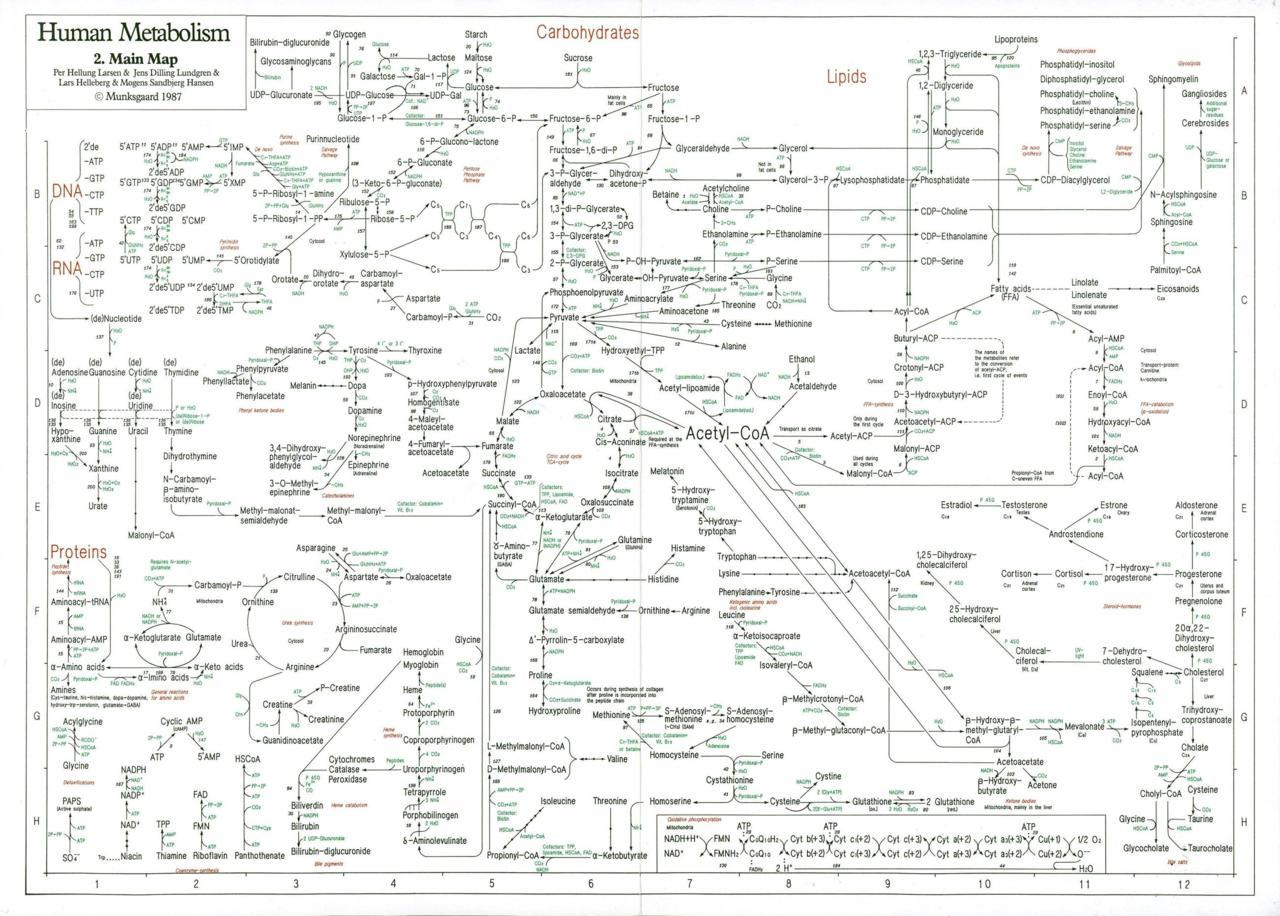 davidbenque:  map of the Human Metabolism