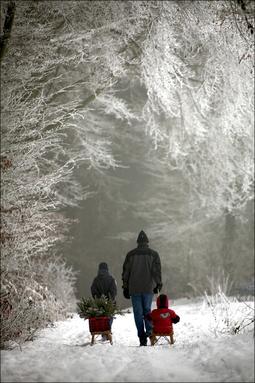 Taking home the tree (via Winter - photo by Izabela Reimers from Winter - Photography (25594424) | fotocommunity)