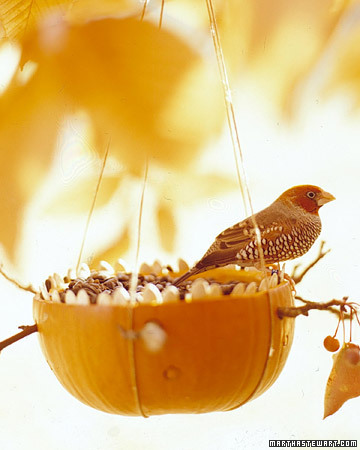A bird feeder made out of a pumpkin!