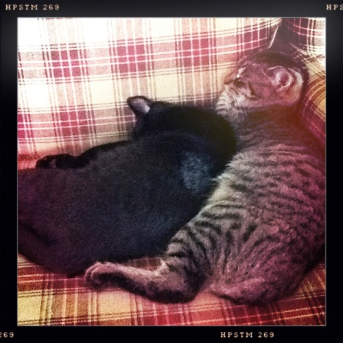 Indy and Abner Lucifer VI Lens, Pistil Film, No Flash, Taken with Hipstamatic