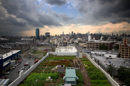 urbangreens:  Brooklyn  Grange - World's Largest Rooftop Farm  位於美國紐約布魯克林,全球最大屋頂農園。