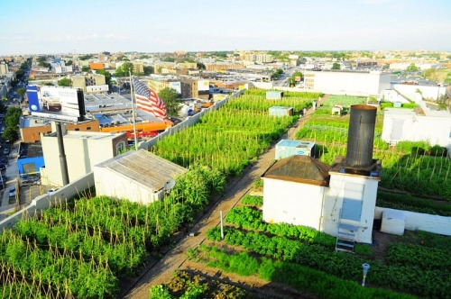 urbangreens:  Brooklyn  Grange - World's Largest Rooftop Farm  The future as demonstrated by those active New Yorkers.