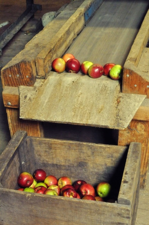 apples via brown bobbin