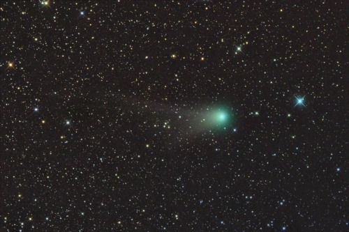 (via APOD: 2011 October 20 - Tails of Comet Garradd) Comet Garrad (C/2009 P1) is showing off its two tails and green coma for a while in Hercules, so if you've got a small telescope or binoculars, go take a look. Garradd is a big comet, but never gets very close while it's travelling through the inner solar system. At the moment, it's about 2 AUs/16 light-minutes away, but you'll need the scope/binocs if you want to see it. Image Credit & Copyright: Gregg Ruppel