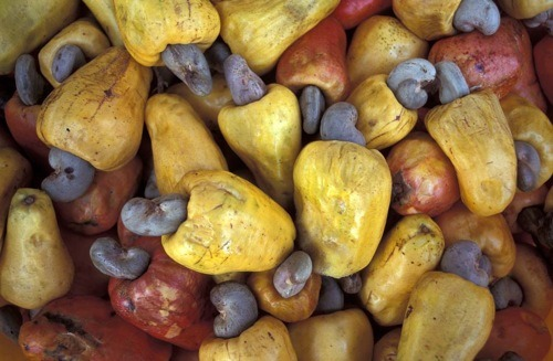 I just recently found out how cashews are grown and did a few Google image searches to see what other foods look like before they're harvested. This was just something I'd never thought about before. It's so amazing and interesting to see how certain things are grown. image source