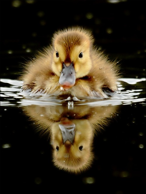 Is not a rubber ducky! (via Zdenek Ondrasek | Photography Magazine PhotoExtract)