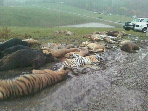 :O this makes me :( Looks like they got the wild exotic animals (via WBNS-TV) Who are the real wild and dangerous animals here? I'd say it's the people that murdered these beautiful creatures!