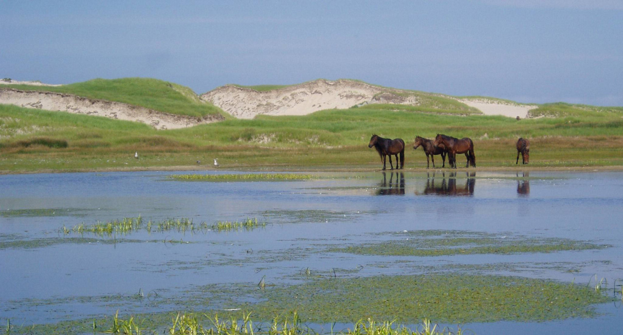 "Tiny Sable Island Canada's newest national parkIt is just a long, slender, green-bean of a thing, but this dune off the cold coast of Nova Scotia is anything but a harmless strip of sand. Its swirling waters are known as the Graveyard of the Atlantic, for they have swallowed 350 ships since 1583. Its underwater Scotian Shelf hosts 18 shark species who feast on the island's grey seals.The island is tall and narrow — 40-km in length, and only 1.5-km in width — and its body is held together by a skeleton of beach grass that traps the sand granules and the pirate wreckage buried within. Hundreds of untamed horses run wild, their matted manes unruly in the blustering wind where the Labrador current collides with the warm gulf stream and breeds thick fog.This is Sable Island, a crescent-shaped mass roughly 300 kilometres out to sea. On Monday, Sable Island was formally named a Canadian national park reserve to ensure, the environment minister said in a statement, that the ""iconic"" and ""fabled"" island will be protected for all time."