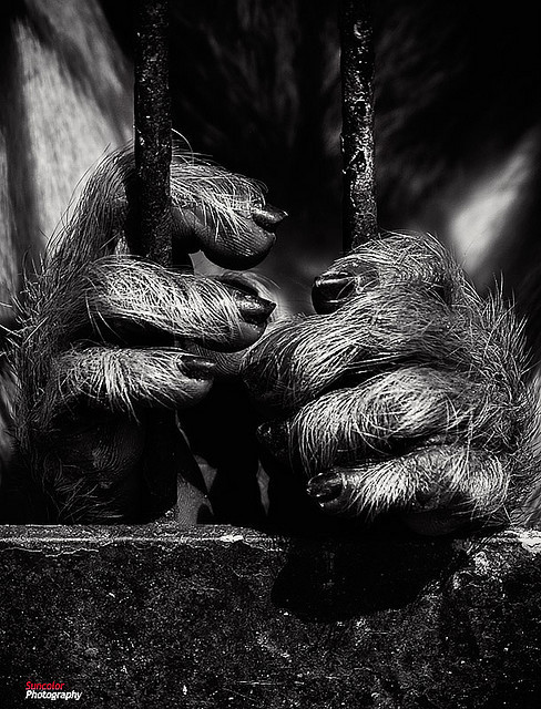Zoo in dark by SQSUN2008 on Flickr. For those poor animals:(
