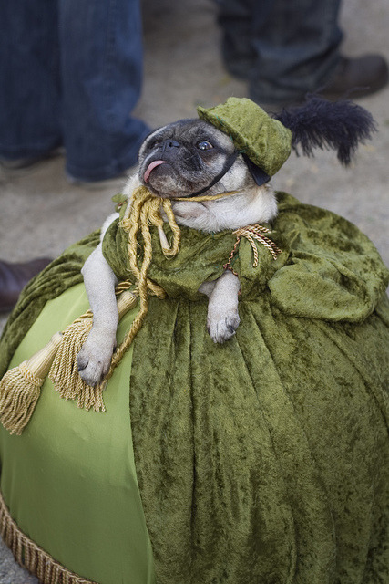 flavorpill:  15 Incredible Highbrow Halloween Pet Costumes  This pug.