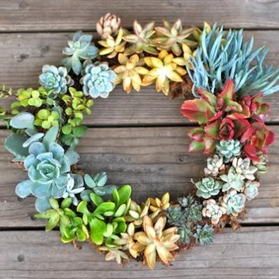 succulent wreath!