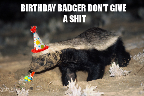 Birthday Badger don't care. (Happy Birthday to me! Also, happy rapture day! Again!)