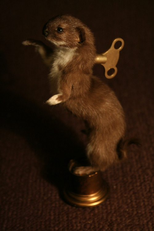 Taxidermy Clockwork Stoat