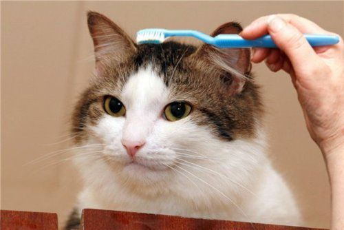 getoutoftherecat:  unimpressedcats:  I am a tooth   no.   Don't be tooth.