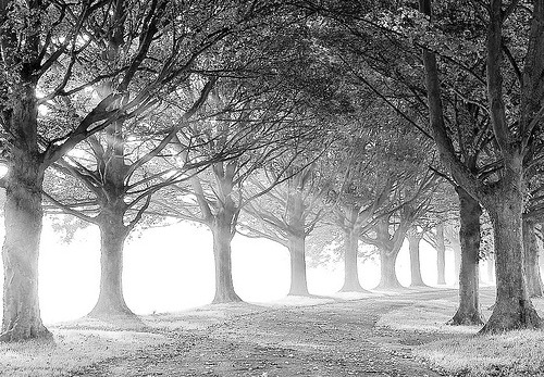 Black and White Avenue (by algo)