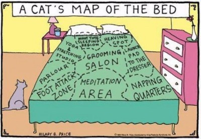 A Cat's Map Of The Bed    For at least 10.000 years, the animal known to taxonomists as Felis silvestris catus has been among the dearest friends of Homo sapiens sapiens. Their tendency to hunt rats, mice and other vermin earned them the most-favoured pet status. Contributing to their popularity with early farmers is the fact that cats are strict meat-eaters, passing over the precious harvest of grain and other vegetables. Cats are known to hunt over 1.000 different animal species for food. The Egyptians venerated the mythical cat Bast as goddess of the home and protector of the fields and home from vermin. Nowadays, for many people, cats are even more familiar than gods: they're full members of the household. Through thousands of years of domestication, cats have grown accustomed to people, and demonstrate certain pseudo-human traits. They're pretty fussy eaters, for starters, sometimes starving themselves rather than eating food they don't like. And they can appear rather lazy, sleeping on average 13 to 14 hours a day – sometimes even up to 20 hours. Not really a 'cat nap', is it? Anybody who's ever had a cat can testify to the fact that cats, while at times very friendly, cuddly and agreeable to people, in essence are solitary animals with an agenda of their own. To some exasperated owners, returning home after a hard day's work to find the cat still curled up in the same place as when they left for the office, the question may arise: who is who's pet? That's sort of the attitude expressed in this cartoon map, which shows what cats really make of the bed of their 'owners'. The map came from here. To conclude this 'Cat's Map of the Bed', here are 10 things you didn't know about cats (unless you're a cat fancier):1.	Cats don't have a clavicle bone, allowing them to pass through any space no bigger than their head.2.	Cats move both legs on one side, and then both leg on the other, a trait they share withcamels, giraffes and a select few other mammals. Nobody knows what the connection is, if any.3.	Typically, cat's claws are sharper on the forefeet are sharper than on the hind feet.4.	Most cats have five claws on their front paws and four or five on their rear paws, but cats are prone to polydactyly. Famously, the cats hanging around Hemingway's house in Key West are six-toed.5.	Cat's night vision is superior to humans, but their day vision is inferior.6.	The official name for cat's whiskers is vibrissae.7.	Due to an ancient mutation, cats can't taste sweetness.8.	Blue-eyed cats with white fur have a higher incidence of genetic deafness.9.	Cats expend nearly as much fluid grooming as they do urinating.10.	Cats will almost never meow at other cats; that sound is reserved mostly for communication with humans. Frank Jacobs on August 16, 2007, 8:44 PM - courtesy of bigthink.com