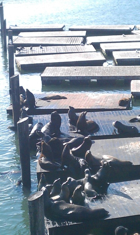The famous sea lions at Pier 39. There are a lot less of them than when I was younger.