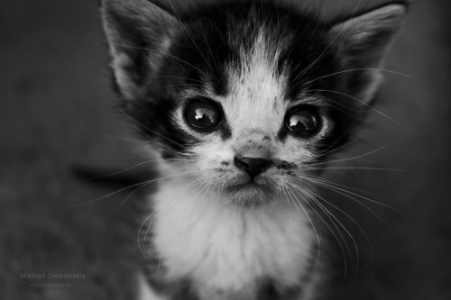 black-and-white:  the saddest story | by MikhailStepanskiy