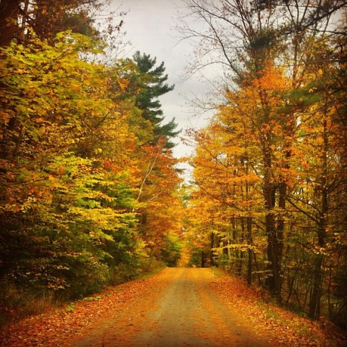 benandjerrys:  Our home state of Vermont is gorgeous in the fall.    I left Vermont too early. I love it there.
