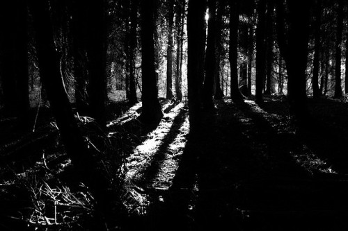 The dark woods… by Stumbling in the darkness on Flickr.